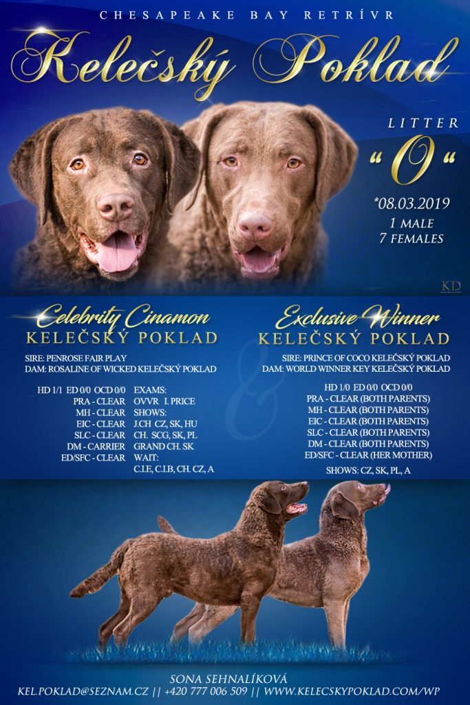 Chesapeake bay retriver s PP (fenky)