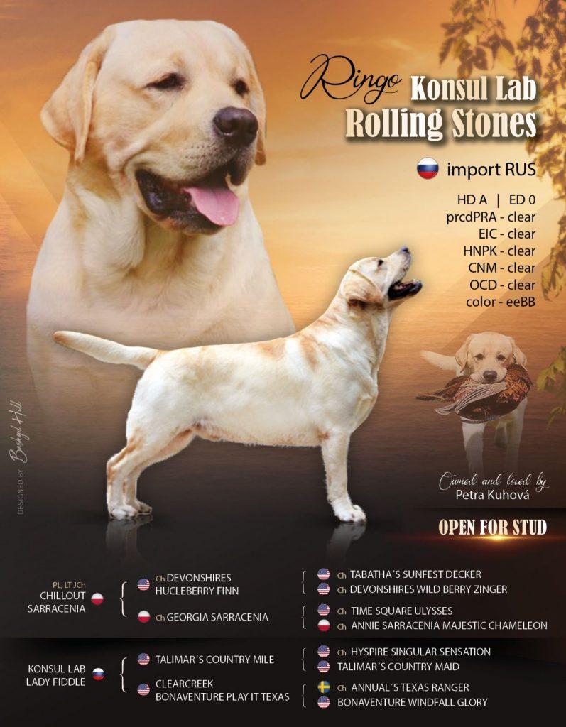 Nabídka krytí Labrador retriever