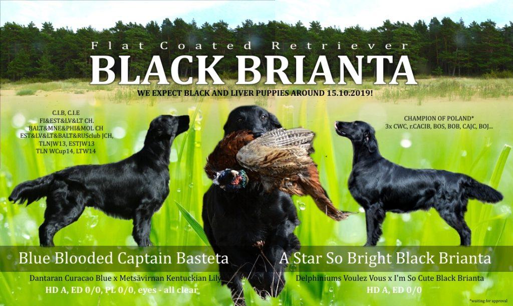 Flat Coated Retriever – černá štěňátka ze zahraničního krytí.