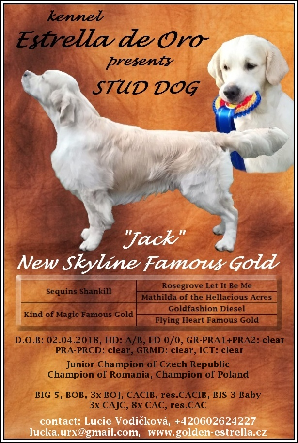 Zlatý retrívr nabídka krytí – NEW SKYLINE FAMOUS GOLD