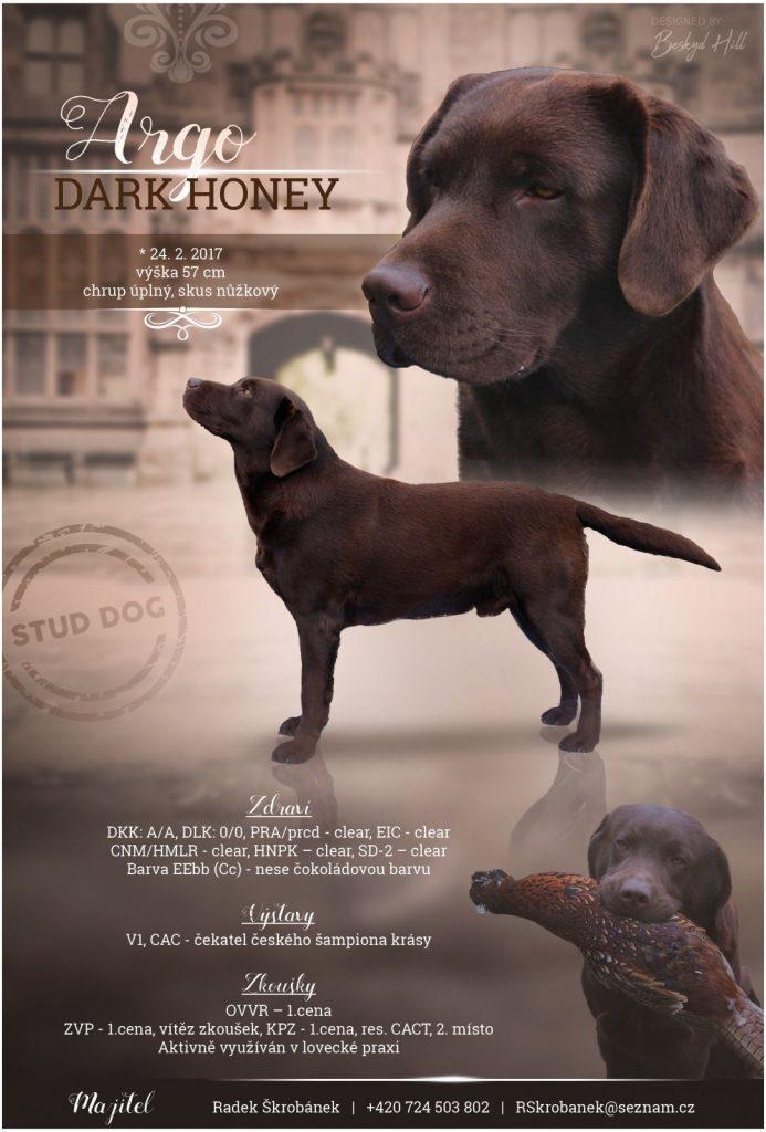 Argo Dark Honey – chovný pes